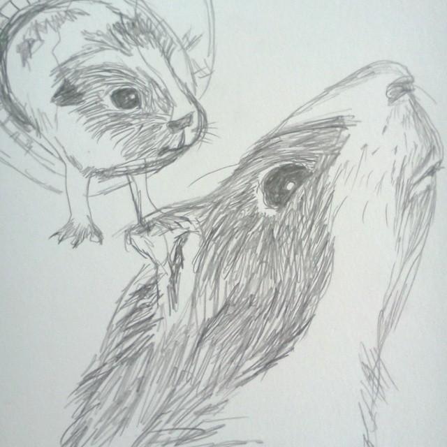 More Guinea Pigs...